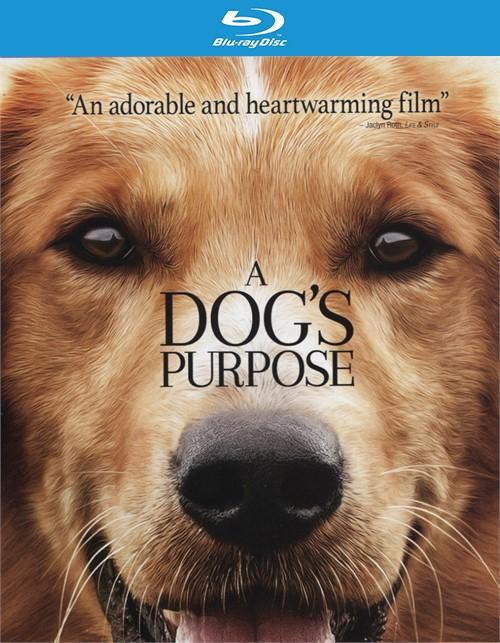 A Dog S Purpose English Subtitles